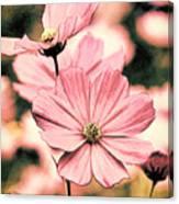 Flowers - Retro Cosmos Canvas Print