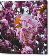Leeds Pink Flower Canvas Print