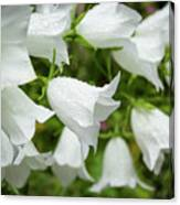 Flowers With Droplets 1 Canvas Print