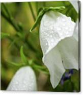 Flowers With Droplets 4 Canvas Print