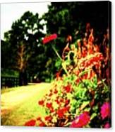 Flowery Path Canvas Print