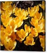 Flowery Sunshine Canvas Print