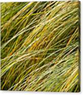 Flowing Green Grass  Abstract Canvas Print