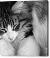 Fluffy Comfort Canvas Print