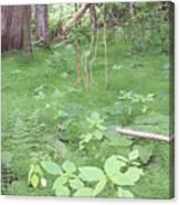 Fluffy Ferns Canvas Print