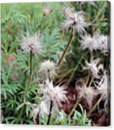 Fluffy Flowers Canvas Print