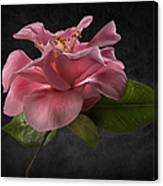 Fluffy Pink Camellia 2 Canvas Print