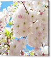Fluffy White Pink Sunlit Tree Blossom Art Print Canvas Baslee Troutman Canvas Print