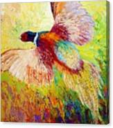 Flushed - Pheasant Canvas Print