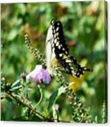 Flutter By 102110 Canvas Print