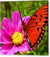 Fritillary Flutterby Canvas Print