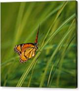 Fluttering Through The Summer Grass Canvas Print
