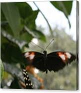 Fly Free - Black, Orange, White Butterfly Canvas Print