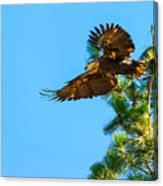 Fly Like An Eagle Canvas Print