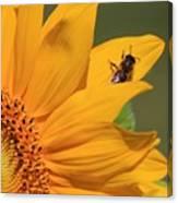 Fly On Sunflower Canvas Print