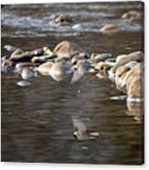 Flycatcher Hunting On The Buffalo River Canvas Print