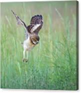 Flying Baby Burrowing Owl Canvas Print