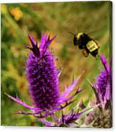 Flying Bee 2 Canvas Print