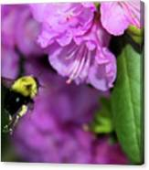 Flying Bee Collecting Pollen Canvas Print