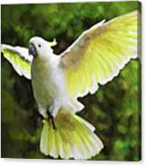 Flying Cockatoo  Canvas Print