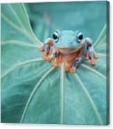 Flying Frog Wallace Canvas Print