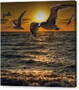 Flying Gulls At Sunset Canvas Print