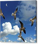 Flying High In The Clouds Canvas Print