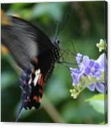 Flying In close up Canvas Print
