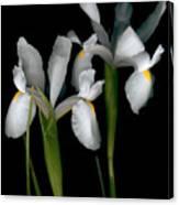Flying Irises 2 Canvas Print
