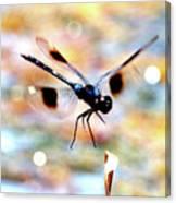 Flying Sparkler Canvas Print