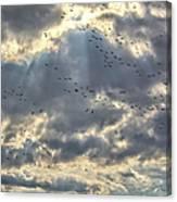 Flying Through Sun Rays Canvas Print