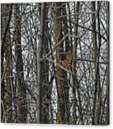 Flying Through The Trees Of The Forest Canvas Print