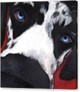 Flynn Canvas Print