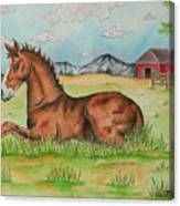 Foal In Grass Canvas Print