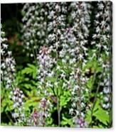 Foam Flower Tiarella Cordifolia Canvas Print