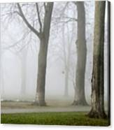 Fog Amongst The Trees Canvas Print