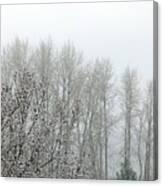 Fog And Light Snow Canvas Print