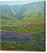 Fog And Wildflowers At Bear Mountain Canvas Print
