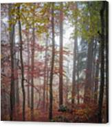 Fog In Autumn Forest Canvas Print