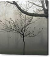 Fog In Shenandoah Canvas Print