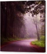 Fog In The Redwoods Canvas Print