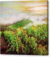 Fog On The Vines Canvas Print