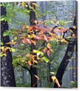 Foggy Fall Forest Canvas Print