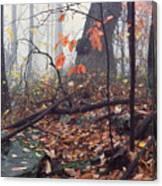 Foggy Fall Woodland Morning Canvas Print