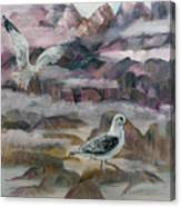 Foggy Gulls Canvas Print