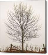 Foggy Lone Tree Hill Canvas Print