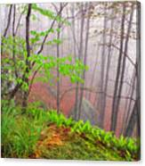 Foggy Misty Spring Morning Canvas Print
