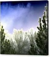 Foggy Moonlit Night Canvas Print