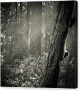 Foggy Morning In The Woods Canvas Print