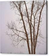 Foggy Morning Landscape 13 Canvas Print